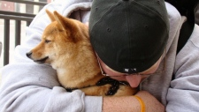 UBC researcher says most dogs don't like hugs