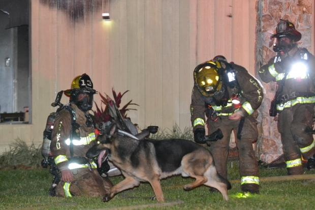 Ctv News Red Deer Dog