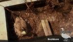 BioWare Goose Cam