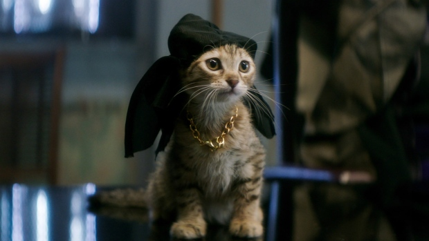 A cat playing Keanu is seen in a scene from 'Keanu.' (Warner Bros. Entertainment)