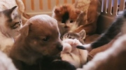 Canada AM: Puppy adopted by mother cat
