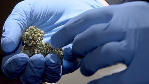 CTV National News: Regulating the pot industry