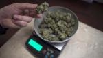 Marijuana is weighed at a medical marijuana dispensary, in Vancouver, Wednesday, Feb. 5, 2015. THE CANADIAN PRESS/Jonathan Hayward