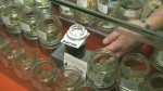 CTV News Channel: Pot showdown in Vancouver