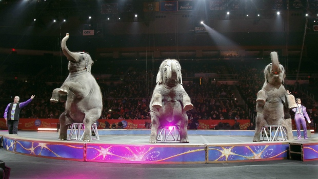 Elephants perform at a Ringling Bros. circus