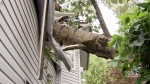 Close call: Tree crashes into bedroom