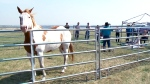 CTV Saskatoon: Healing power of horses