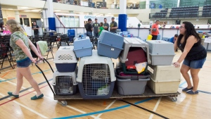 Volunteers bring in more donated kennels for pets of evacuees from the Fort McMurray wildfires at a shelter in Lac la Biche, Alta., on Friday, May 6, 2016. (Ryan Remiorz / THE CANADIAN PRESS)