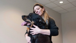 Valeria Martinez plays with her nine year old Rottweiler Cujo at the Animal Cancer Centre in Guelph, Ont., on Thursday, April 28, 2016. (THE CANADIAN PRESS/Hannah Yoon)