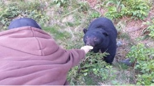 hand feeding a bear near Tofino