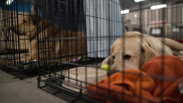 Dogs at the SPCA rescue centre in the Bold Center