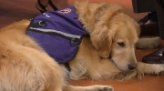 Canada AM: National Service Dogs