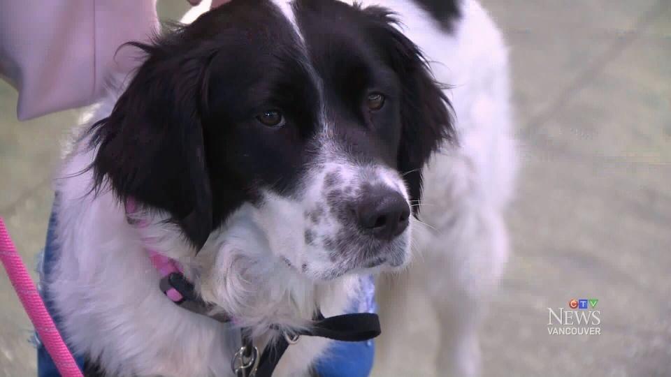 Help Training Service Dog Vancouver