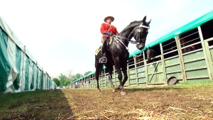CTV National News: RCMP Musical Ride for royalty