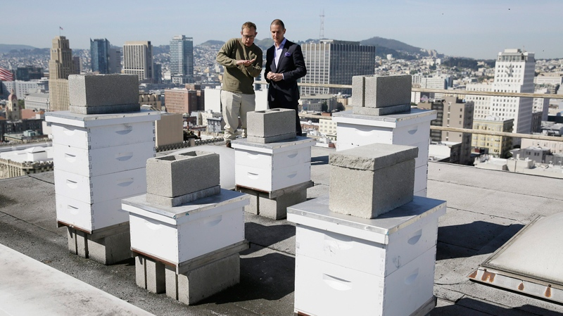 In this photo taken Monday, April 18, 2016, beekeeper Roger Garrison, left, and hotel general manager Michael Pace look over beehives on top of the Clift Hotel in San Francisco. (AP Photo / Eric Risberg)