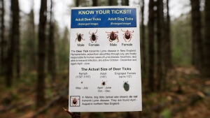 An informational card about ticks distributed by the Maine Medical Center Research Institute is seen in the woods in Freeport, Maine on May 9, 2014. (AP Photo/Robert F. Bukaty)