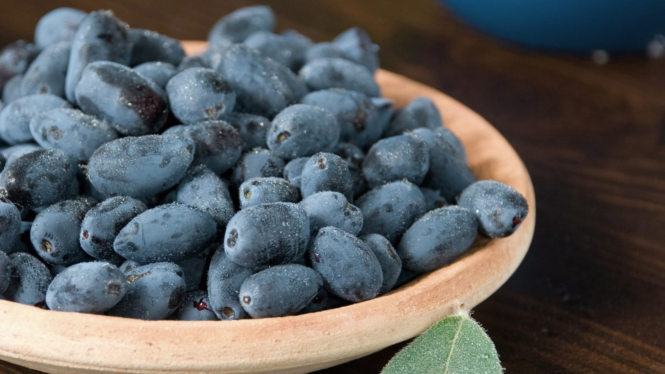 Haskap berries could be the new superfood. (THE CANADIAN PRESS/HO - Haskapa, haskapa.com)
