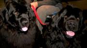 Canada AM: Jeff meets Newfoundland dogs