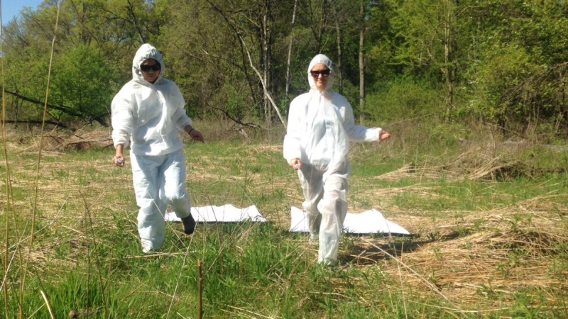 The Windsor-Essex County Health Unit is dragging for black-legged deer ticks at three parks in Windsor and Essex County, on Wednesday, May 18, 2016. (Rich Garton / CTV Windsor)
