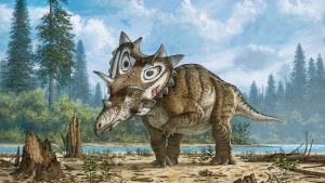 This undated artist rendering provided by the Canadian Museum of Nature shows a new horned dinosaur Spiclypeus shipporum nicknamed Judith. (Mike Skrepnick / Canadian Museum of Nature via AP)