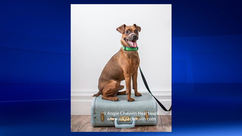The Windsor Essex County Humane Society says Justice is ready for his forever home. (Courtesy Angie Chauvin Heartwork / Windsor Essex County Humane Society)