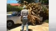 Jeff's Video: How not to remove a palm tree