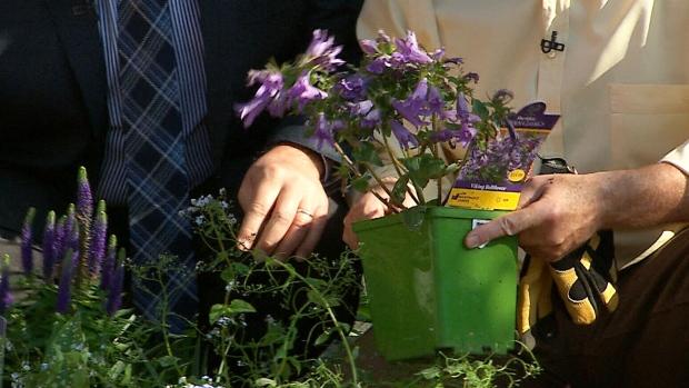 Canada AM: Planting perennials