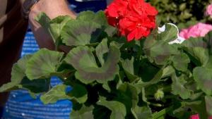 How to identify good quality plants