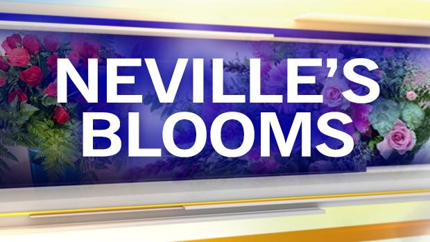 Neville's Blooms