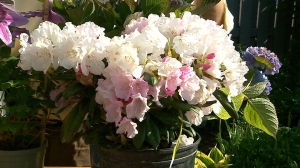 Canada AM: How to prune your plants
