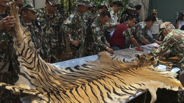 40 dead tiger cubs found in freezer at a Thai Buddhist temple