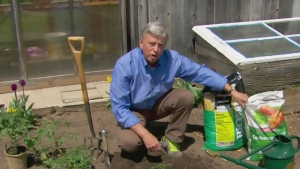CTV News Channel: Growing great tomatoes
