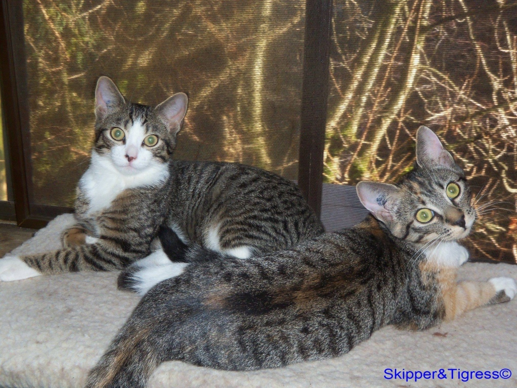 Adopt A Cat Month Pets Who Found Their Fur Ever Homes