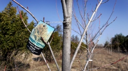 Even when tree staking is beneficial, it is usually so only for a relatively brief period of time. (AP Photo/Carlos Osorio, File)