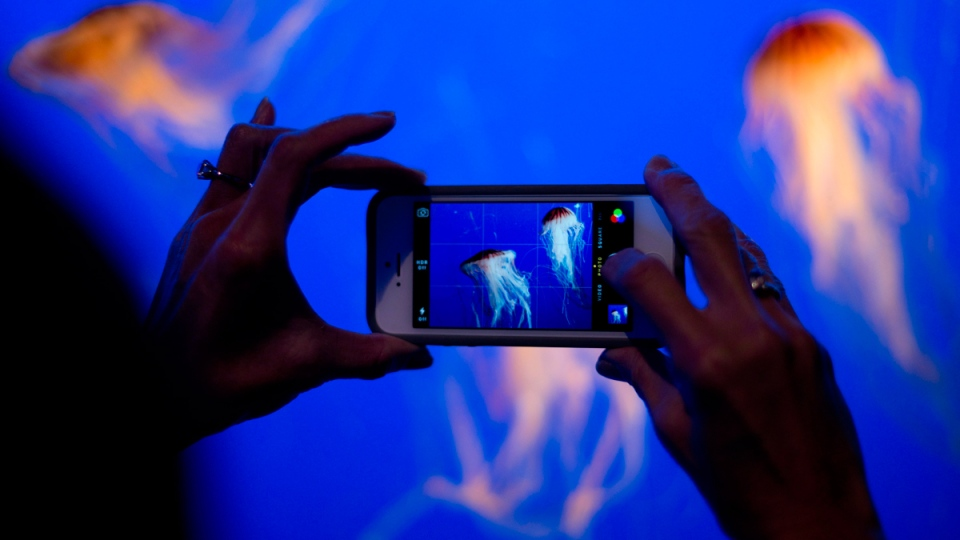A visitor photographs jellyfish at the Vancouver Aquarium on Thursday, Dec. 19, 2013. (Jonathan Hayward / THE CANADIAN PRESS)