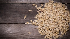 Barley
