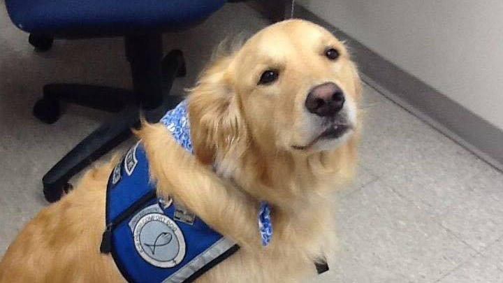 Gracie the Comfort Dog is seen in this photo from social media. (Facebook / LCC K-9 Comfort Dogs)