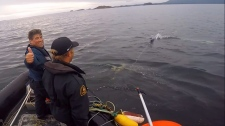 dfo humpback rescue b.c.