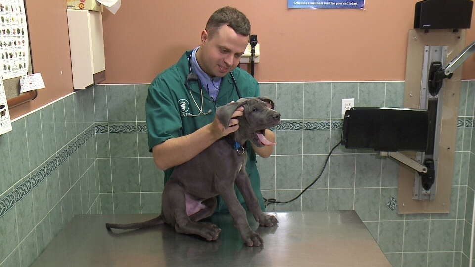 Vet Dr. Kevin McIntosh checking Apollo for ticks.