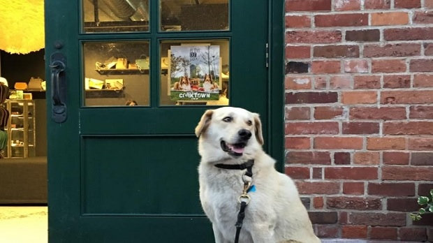 A dog poses next to a store front with a poster from the community group called Dogs of Corktown. (Facebook/Dogs of Corktown)