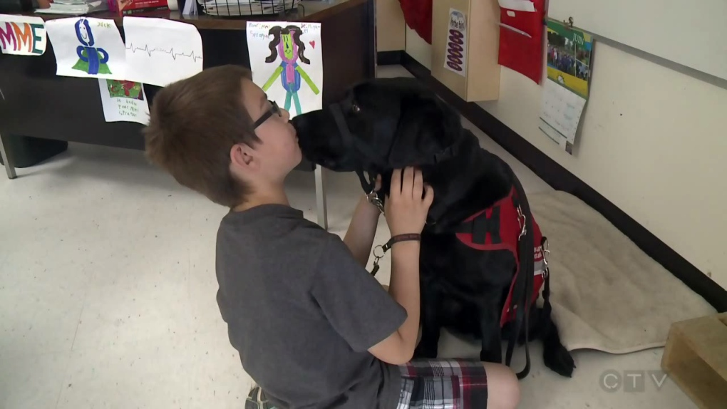 Seeing eye dogs for what they are