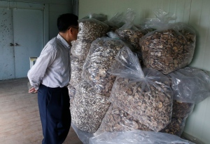 In this June 1, 2016 photo, scientist Lee T.B. who fled North Korea to South Korea, looks at packs of mushrooms at his newly-built laboratory in Hwaseong, South Korea. (AP / Lee Jin-man)