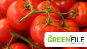 Mark Cullen with part two of his tips on growing tomatoes, in this week's the Green File