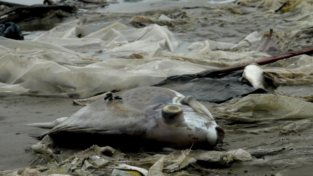 Taiwanese company to pay for dead fish