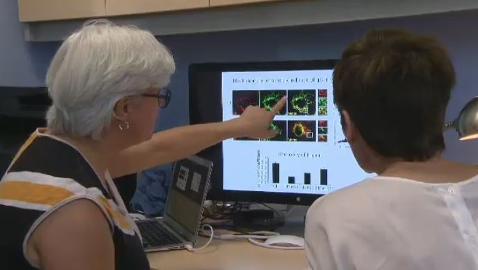 FILE PHOTO: Montreal Neurological Institute scientist Dr. Heidi McBride is part of a Parkinson's discovery.