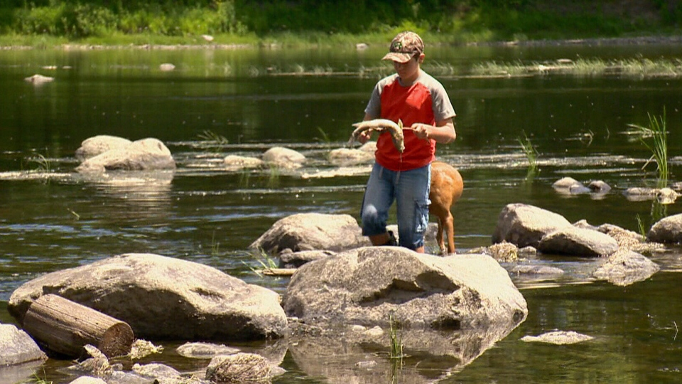 Residents discovered the dead fish late last week.