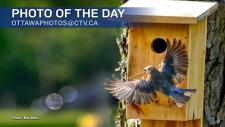 Bob Betts/CTV Viewer