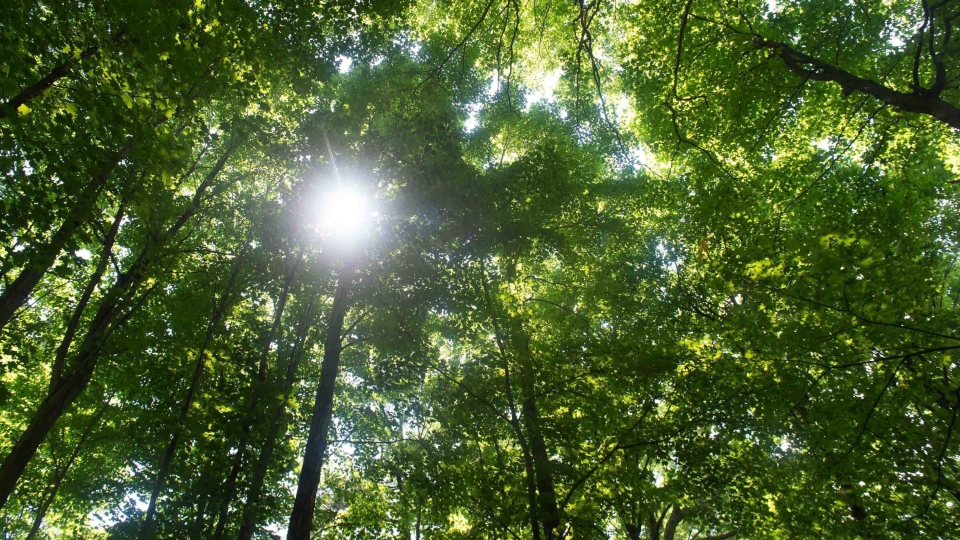 A forest canopy is shown at Sunnybrook Park, in Toronto, on Friday, June 3, 2016. (Eduardo Lima/The Canadian Press)