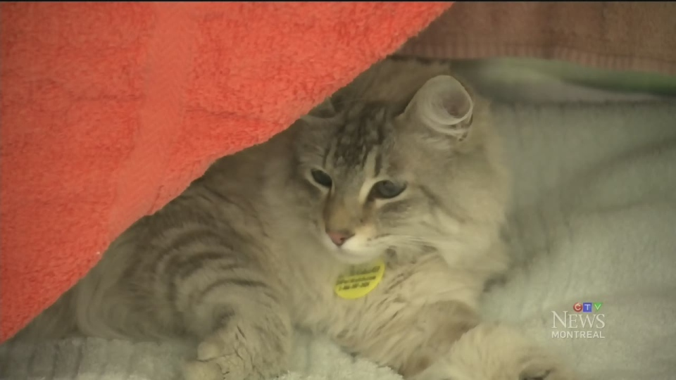 The SPCA says the number of abandoned animals that it receives skyrockets around moving day.