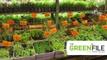 CTV's gardening expert Mark Cullen with tips on planting herbs.